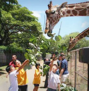 Children from the Holy Family Home feed giraffes while on a trip to Hawaii sponsored by the Wolfhounds.
